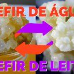 Combo – KEFIR DE LEITE + KEFIR DE ÁGUA – com Frete Grátis